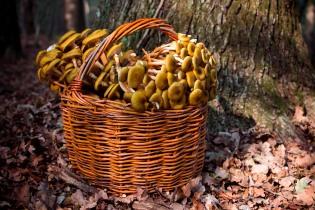 Color ruggine nel bosco - Foto di Paola Moriggi